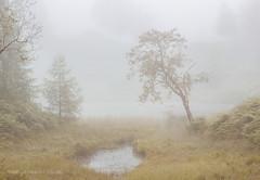 Morning Mist (Thomas Heaton) Tags: thomasheaton mist trees fog woodland lakedistrict uk