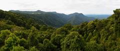 Dorrigo Skywalk Panorama (Paul Hollins) Tags: panorama landscapes rainforest newengland australia newsouthwales dorrigo waterfallway nikond750