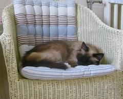 Strange where cats like to lay (Judith North) Tags:
