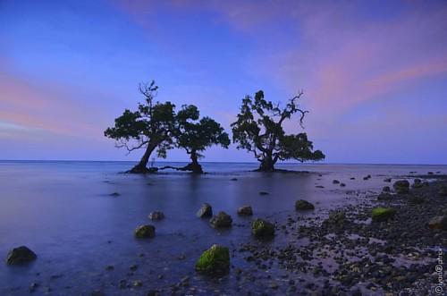 Lamalu Beach - Pantar Island   #alor #pantarisland #landscape #landscaper #sunrisehunter #adventure #mangrove #sunset #longexpoelite #longexposure #nature #bajaklaut_id #indonesia