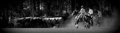 Tropeando (Eduardo Amorim) Tags: gacho gachos gaucho gauchos cavalos caballos horses chevaux cavalli pferde caballo horse cheval cavallo pferd crioulo criollo crioulos criollos cavalocrioulo cavaloscrioulos caballocriollo caballoscriollos gado ganado cattle btail bestiami cachorros perros dogs chiens pampa campanha fronteira arroiogrande riograndedosul brsil brasil sudamrica sdamerika suramrica amricadosul southamerica amriquedusud americameridionale amricadelsur americadelsud cavalo         hst hest hevonen  brazil eduardoamorim