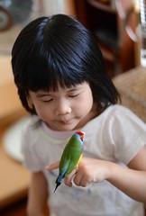 DSC_9252 (Jenny Yang) Tags: 小啾啾 小呆 小蕃茄 胡錦鳥 寵物鳥 lady gouldian finch pet bird