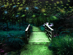 magical enchanting scene fireflies effect (Aqua and Coral Imagery) Tags: fireflies lights effect nature garden landscape magic night magical trees