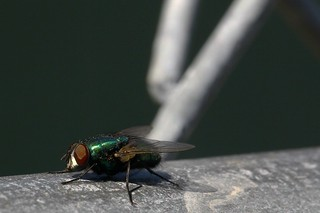 Fly On Fence