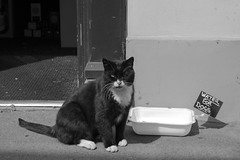 Water for dogs ... (Dai Lygad) Tags: cat cats waterfordogs sign water talgarth georgebutchers august 2016 summer dogs funny catsanddogs animals blackandwhite noiretblanc bw photo photograph picture image drinking pet nice chats gatos gato chat town thirst geotagged everyday  mo   billeekee billee feline freetouse stockphoto stockimage creativecommons attributionlicense attributionlicence jeremysegrott magicmoment dr