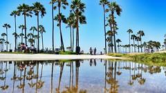 Puddle by the beach (CzechInChicago) Tags: la losangeles santamonica venice beach muscle reflection puddle puddlegram puddlemasters palm california baja globetrotter businesstrip