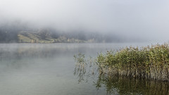 Morning at the Lake V (Robert Guenther) Tags: lake fog morning landscape sony nature austria carinthia