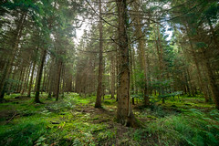 Deep In The Forest (dreamisbutalife) Tags: 20160911 forest trees grass samyang 14mm secluded landscape fantasy