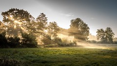 Golden September (Christian Wilmes) Tags: golden september herbst autumn wiese meadow licht light sun sonne sunrays strahlen bume trees nebel fog foggy sony dsc rx100