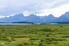 Green Lush (Marisa Sanders Photography) Tags: tetons grandtetons thegrandtetons nps np gtnp grandtetonnationalpark canon canon7d explore outdoors outside gtfoutside gtfoutdoors landscape photography lake