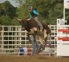 When Bulls Fly (Yakin669) Tags: horses horse lake cowboys cowboy florida barrels bull bulls rodeo cowgirl windyacres fruitlandpark renegaderodeobarrelscowboycowgirlhorsebullfruitlandparkflorida