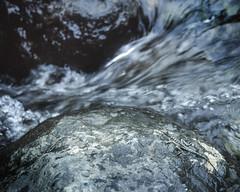 aquatic basilisk (Lars L. Iversen) Tags: provia vittatus basiliscus