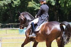 IMG_4756 (dreiwn) Tags: horse pony horseshow pferde pferd equestrian horseback reiten horseriding dressage reitturnier dressur reitsport dressyr dressuur ridingclub ridingarena pferdesport reitplatz reitverein dressurreiten dressurpferd dressurprfung tamronsp70200f28divcusd jugentturnier