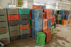 Colorful Storage Crates Against the Wall (IFPRI-IMAGES) Tags: india plant foods village farm farming grow vegetable storage health produce farmer agriculture yield process crate cultivation sustainable nutrition manoli haryana farmtotable pratibha sonipat foodsecurity agriculturaldevelopment foodprocessingplant farmtofork micronutrients ifpri