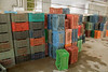 Colorful Storage Crates Against the Wall (IFPRI) Tags: india plant foods village farm farming grow vegetable storage health produce farmer agriculture yield process crate cultivation sustainable nutrition manoli haryana farmtotable pratibha sonipat foodsecurity agriculturaldevelopment foodprocessingplant farmtofork micronutrients ifpri