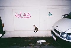 Selfish cat (alice_elice) Tags: cat urban city bucharest film camera leica mini 3