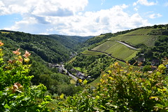 Grundelsbach (pilot.henry) Tags: sky green germany vineyard bright earth peaceful valley verdant quaint bushes senic