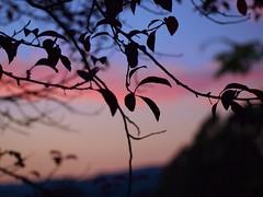 Sunset 20140913 (caligula1995) Tags: 2014 clouds plumtree sunset