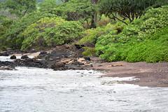 Oneuli black sand beach (heartinhawaii) Tags: oneuli makena maui hawaii southmaui blacksandbeach
