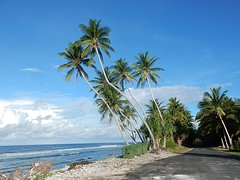 From Right to Left (mikecogh) Tags: funafuti tuvalu coast wind prevailing invisible palmtrees leaning rubbishbins