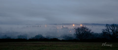 08 janvier 2016 (plovemax) Tags: winter hiver country campagne paysage landscape brouillard fog heurebleue bluehour bovin cattle troupeau vache cow