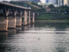 The Paddle Boarder (EmreKanik) Tags: seoul bridge river lensbaby water tiltshift asia paddleboarder watersports southkorea hanriver kr