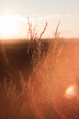 IMG_2761 (Mikhail Konovalov) Tags: sunset sun field grass bokeh закат солнце трава поле бокэ