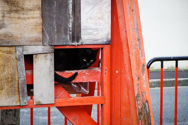 Today's Cat@2015-04-18