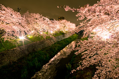 IMGP5791_ (m.hamajima) Tags: night spring pentax nagoya  cherryblossom   k3     da14mmf28