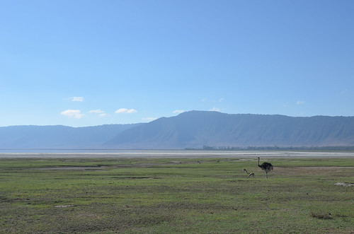 The watcher, Ngorongoro Crater, Tanzania