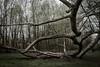 Stramge tree (Daniel Kulinski) Tags: park photography spring europe image daniel creative picture samsung poland 20mm 1977 photograhy nx pruszków mazowieckie nx1 kulinski samsungnx samsungimaging nx20mm danielkulinski samsungnx20mmf28 nx20mmf28 samsungnx1