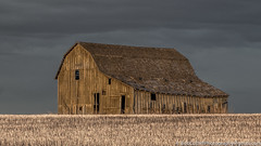 Showing My Age But Standing Proud (westrock-bob) Tags: old morning copyright canada colour clouds barn rural canon outdoors eos outdoor decay ab alberta weathered bigsky aged agriculture daybreak archi 6d reproduced cuthill albertatourism canon6d trochu tourismalberta kneehillcounty canoneos6d bobcuthillphotographygmailcom bobcuthill stubbleage