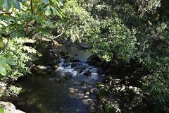 Mossman gorge, Daintree NP (chabalmathias) Tags: trip holiday australia tropical vacance australie oceania dryseason oceanie tropicalnorth saisonseche