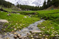 Flowing (aliabdullah.176) Tags: kutwal haramosh valley gilgitbaltistan pakistan water stream grass green landscape las lumsadventuresociety travel