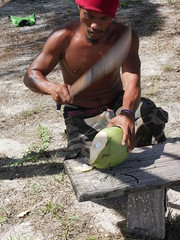 Nothing like a fresh coconut in the morning!