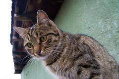 Turkey (maria.zimfer) Tags: turkey ankara travel winter snow cat streetcat slum ghetto