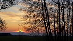 *** (pszcz9) Tags: polska poland przyroda nature drzewo tree wschdsoca sunrise pejza landscape sony a77 wiosna spring beautifulearth