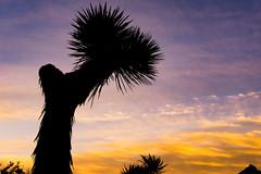 Joshua Tree Sunset @ Joshua Tree National Park (Wanderlust1907) Tags: california sunset joshuatree joshuatreenationalpark