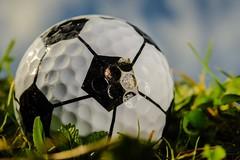 Summer Olympic Sports (Cjlws) Tags: summerolympicsports macromondays golf football