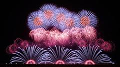 Autumn Mood (peaceful-jp-scenery) Tags: fireworks display summer festival yamagata akagawa tsuruoka        sony 7r a7r ilce7r amount sal1635z variosonnart1635mmf28zassm carlzeiss laea4