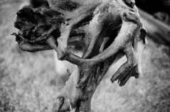 (sophieoddo) Tags: wood wild blackandwhite mountains film nature clouds analog 35mm landscape photography 50mm iceland bokeh hiking wildlife exploring details explorer grain glacier adventure human land argentique neverstopexploring filmisnotdead keepexploring sophieoddo