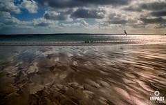 Sand Art and Steven Seagul (Impact Imagz) Tags: sea scotland sand waves seagull seashore westernisles sandart isleoflewis ebb outerhebrides tideline scottishcoast gressbeach lochatuath