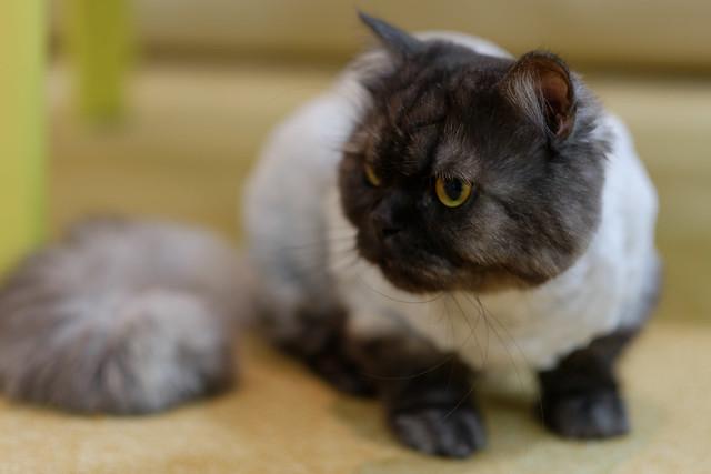 ai-cat 15