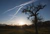 Rising sky (Melvinia_) Tags: blue sky tree nature field skyscape landscape bayern bavaria europe bleu ciel 1855mm paysage extérieur arbre baum chiemsee 18mm herreninsel bavière canoneos450d digitalrebelxsi