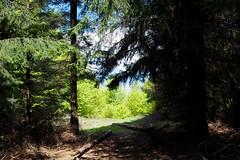 erdei tisztás /  forest glade (debreczeniemoke) Tags: forest landscape spring hike tavasz glade gutin erdő túra feketehegy látkép tisztás mogoşa gutinhegység munţiigutâi munţiigutin olympusem5 gutinmountains