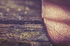 Leaf, wood and moss (RoCafe) Tags: wood macro leaf bokeh mm moos flickrphotowalk macrotextures nikond600 macromondays nikkormicro105f28 sansebastinspain