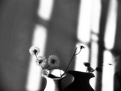 (hasmik.hakobyan) Tags: flower beautiful abstract dandelion blowball soft shadow wall light monochrome indoor blackandwhite