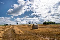L't  la campagne (Croc'odile67) Tags: nikon d3300 sigma contemporary 18200dcoshsmc paysage landscape rundball campagne nature nuage cloud ciel sky