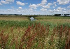 Harssensbosch (Jeroen Hillenga) Tags: netherlands landscape nederland groningen grachten landschap historie geschiedenis zuring steenhuis koningslaagte harssens harssensbosch