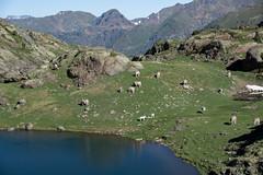 Niżej położóny staw Baiau